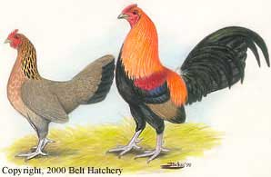 B.B. Old English Bantam